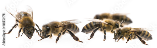 Fotobehang Bee worker bees isolated on a white background