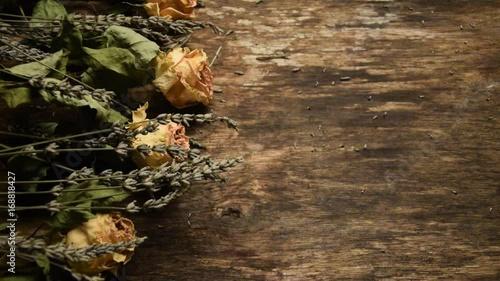 Poster Lavandula Lavender Alhucema Flora Levandule جنس Lofnarblóm flower Lawenda video Lavanda ضرم Lavande Gattung Cantueso Rosa Lavendel Rosier Лаванда 薰衣草 Lavendelsläktet Fiore Roos Flor Rose Botany