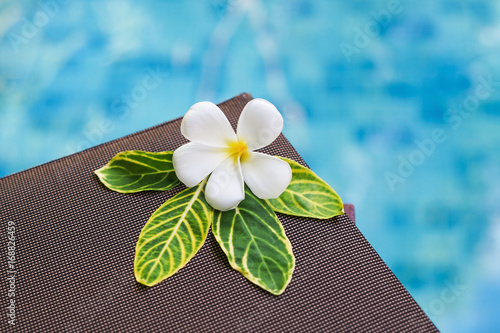 Fotobehang Plumeria plumeria flower on leaf and brown cloth with blurred water background, spa concept