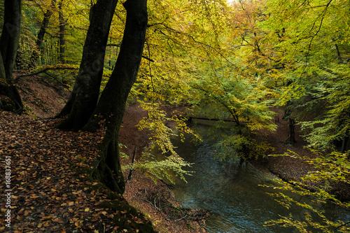 Papiers peints Rivière de la forêt Trees & River