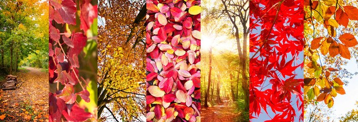 Autumn leaves and nature landscapes panoramic collage, fall concept