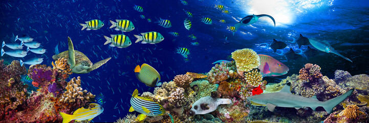 colorful wide underwater coral reef panorama banner background with many fishes turtle and marine life / Unterwasser Korallenriff Hintergrund