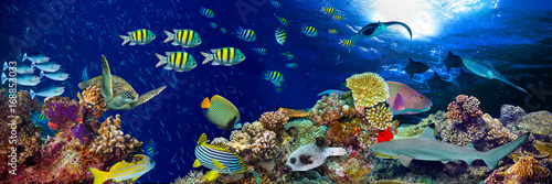 fototapeta na ścianę colorful wide underwater coral reef panorama banner background with many fishes turtle and marine life / Unterwasser Korallenriff Hintergrund