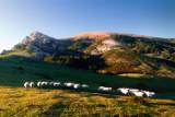 sheep in Gorbea mountain - 168873068