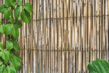 Bamboo material wall framed with green leafs