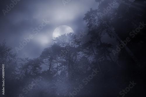 Woods in a foggy full moon night