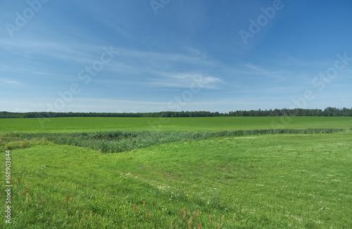 belorussian landscape blue cloudy sky