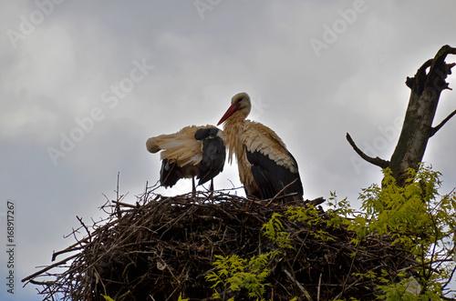 Fotobehang Marokko storks