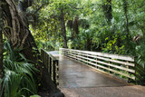 Lush southern nature at the Rainbow Springs, Florida, USA