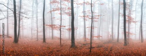 Herbstwald Panorama im Nebel
