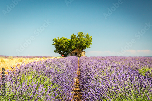 Foto op Plexiglas Lavendel Beautiful landscape among lavender fields, Valensole, France