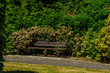 Empty bench in the park in the seaside resort, resting place, green park, sunny day