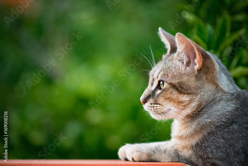 Plexiglas Tijger Cat profile with green vegetation background - copy space on the left