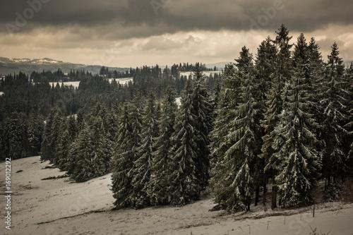 Papiers peints Beige Winter landscape with meadow, trees and mountains Tatra near Zakopane, Poland