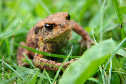 Fotobehang Kikker Frog in the grass