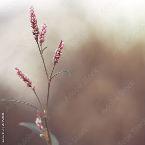 pink red flowers on natural dark background in autumn - 169048838