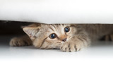 Funny cat looking from under small hole isolated