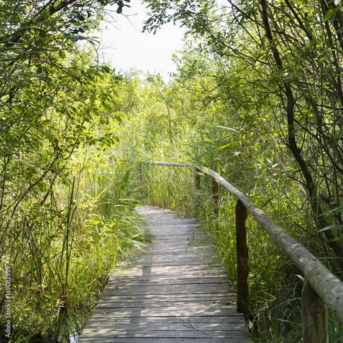 Obraz na Plexi Holzsteg, Wienpietschseen, Nationalpark Müritz, Mecklenburgische Seenplatte, Mecklenburg Vorpommern, Deutschland