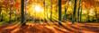 Quadro Goldene Herbststimmung im Wald