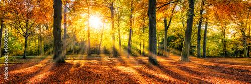 Foto Murales Goldene Herbststimmung im Wald
