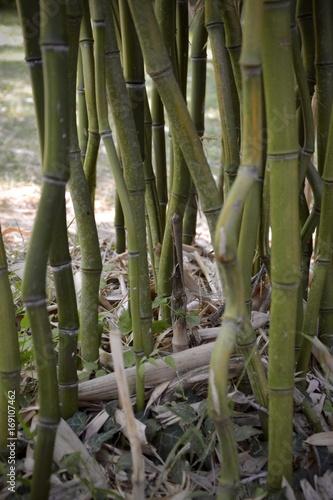 Papiers peints Bambou bambous détails