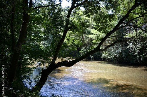 Papiers peints Rivière de la forêt rivière