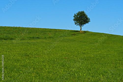 Ein einzelner Baum auf einer Wiese in den Bergen