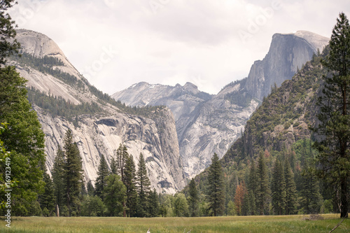 Yosemite Valley with meadow, pine trees, and view of half dome and surrounding g