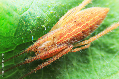 Spider on macro shooting. Poster