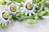 fleur  de la passion,et feuillage