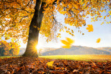 Goldener Herbst  - 169139009