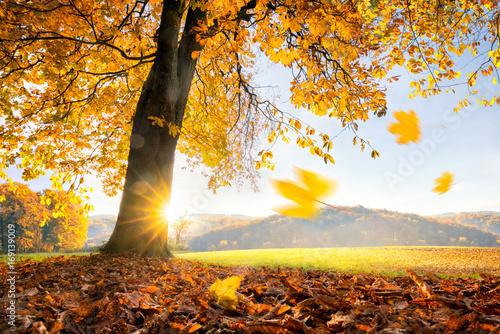 Foto Murales Goldener Herbst