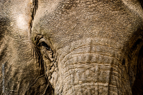 Elephant Face Close Up Rugged Skin Texture Detail