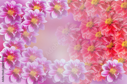 Fotobehang Candy roze colorful of dahlia and green leaf with sun light,