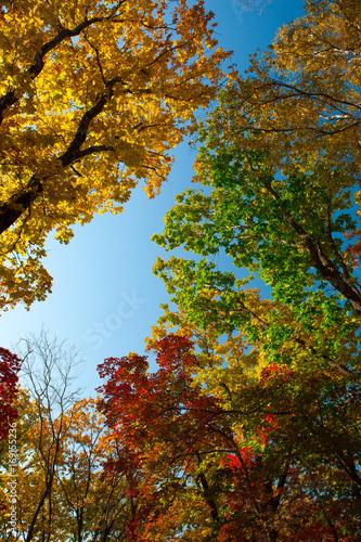 Papiers peints Automne Autumn colorful leaves
