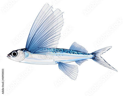 Aluminium Art Studio Flying fish in watercolor