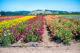 Meadows of colourful flowers - 169175687