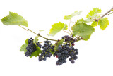 red grapes on a branch with leaves isolated on a white background - 169208096