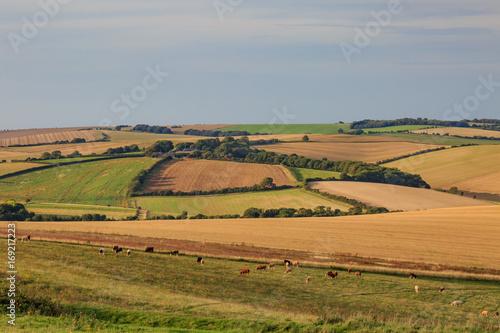 Fotobehang Donkergrijs Sussex Patchwork Landscape
