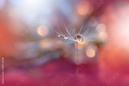 Abstract macro photo with dandelion and water drops.Artistic Background .Flowers made with pastel tones.Tranquil abstract closeup art photography.Print for Wallpaper.Floral fantasy design. - 169228288