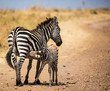Zebra Mother & Child