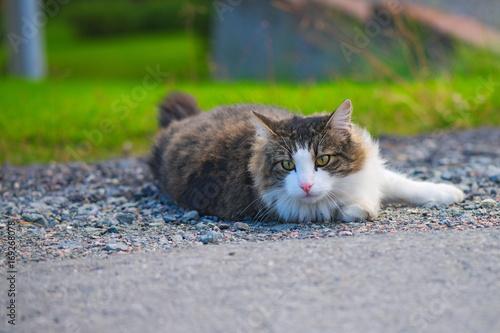 Kot leżący na kamieniach