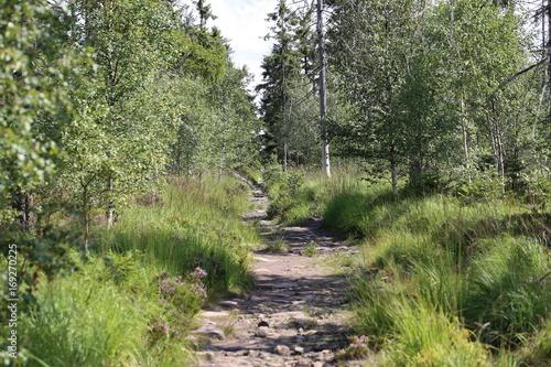 Fotobehang Weg in bos ścieżka przez las wędrówka wśród dzikiej przyrody