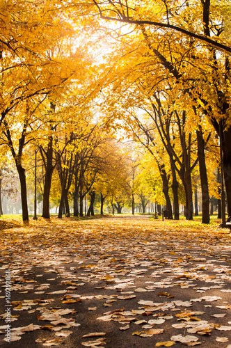Foto op Canvas Herfst Park covered in fallen leaves, autumn scene