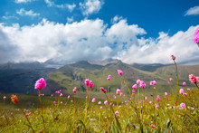 Mountain landscape, flowers on a background of mountains and blue sky