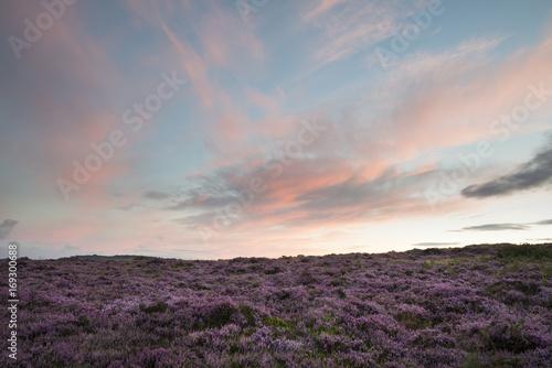 Fotobehang Bleke violet Stunning dawn sunrise landscape image of heather on Higger Tor in Summer in Peak District England