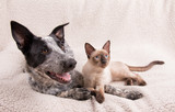 Adorably cute dog and cat together on a soft blanket, looking to the right of the viewer - 169302408