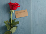 red rose on blue wood table shot from above for valentines day