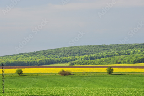 Fotobehang Bleke violet Treated fields, forest, blue sky with clouds. Beautiful summer landscape. Summer landscape under blue sky. Plowing, rape flowers.