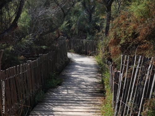 Papiers peints Route dans la forêt Petit chemin en latte de bois dans forêt de pins
